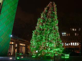 grüner_Weihnachtsbaum_weltbrei320x240